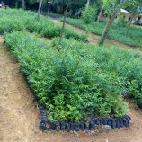 Photos from Kebbi state ministry of environment center for seedlings production at Gotomo Argungu.
