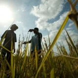 World Bank trains 1300 Kano farmers on addressing agronomic problems
