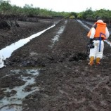 RE- INVESTIGATION: How Buhari administration awarded Ogoni cleanup contracts to unqualified firms