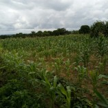 Youth Farmers Oversubscribe To Kwara Govt's Estate Farms