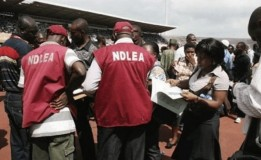 Kano NDLEA seizes 9.075kg illicit drugs, arrests 1,036 in 2020