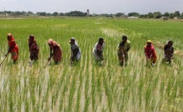 Strange Insects Attack Crops In Kano – Farmers Cry Out, As Food Shortage Looms